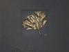 bildschirmfoto-2011-11-19-um-14-52-13